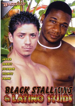 Large Photo of Black Stallions And Latino Studs
